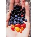 Fructe salbatice VG Vapo