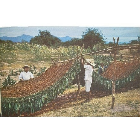 Tabac  Bio (organic 100% natural)